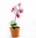 Цветок орхидея в горшках фото